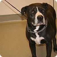 Pit Bull Terrier Mix Dog for adoption in Wildomar, California - Boggard