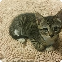 Adopt A Pet :: Leanne - Flower Mound, TX