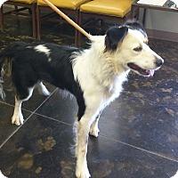 Adopt A Pet :: Roxanne - Ottawa, KS