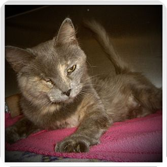 Domestic Mediumhair Cat for adoption in Medford, Wisconsin - ELOISE