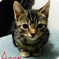 Adopt A Pet :: Annie - Laplace, LA
