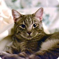 Adopt A Pet :: Suri - West Palm Beach, FL