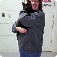 Adopt A Pet :: Tarney - Elyria, OH