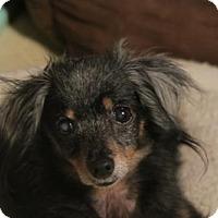Adopt A Pet :: PEANUT (R&J KW) - Tampa, FL