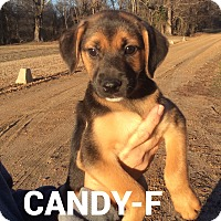 Adopt A Pet :: Candy - Trenton, NJ