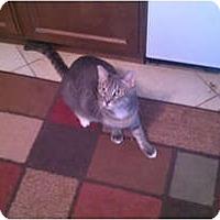 Adopt A Pet :: Jack - Laguna Woods, CA