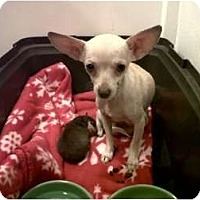 Adopt A Pet :: Mom-N-Pup - Chimayo, NM