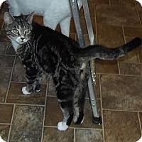 Adopt A Pet :: Karen - Catasauqua, PA