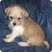 Adopt A Pet :: Gremlin - Phoenix, AZ
