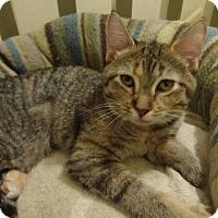 Adopt A Pet :: Emilie - Colmar, PA