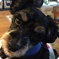 Adopt A Pet :: Ziggy - LEXINGTON, KY