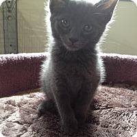 Adopt A Pet :: Gabi - Speonk, NY