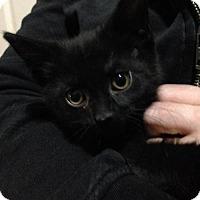 Adopt A Pet :: Riku - Caistor Centre, ON