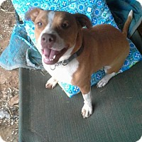 Adopt A Pet :: Jewels B. Precious - SAN ANTONIO, TX