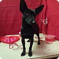 Adopt A Pet :: Zeus - Modesto, CA