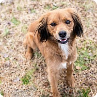 Adopt A Pet :: Selina - Peachtree City, GA