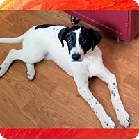 Adopt A Pet :: Bess - Genoa City, WI