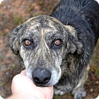 Adopt A Pet :: Jake - Marietta, GA