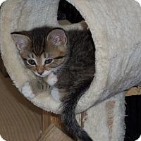 Adopt A Pet :: RUBY - Medford, WI