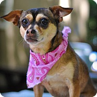 Adopt A Pet :: Essie - Milpitas, CA