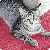 Adopt A Pet :: Megara - Lathrop, CA