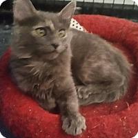 Adopt A Pet :: Honey - temecula, CA