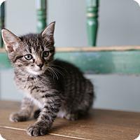 Adopt A Pet :: Cameron - San Antonio, TX