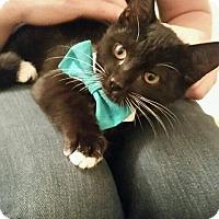 Adopt A Pet :: Milton - Gainesville, FL