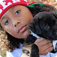 Adopt A Pet :: Lane - Mocksville, NC