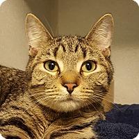 Adopt A Pet :: Willemina - Grayslake, IL