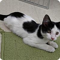 Adopt A Pet :: Frankie - Warren, OH