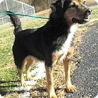 Adopt A Pet :: Sheldon - Reeds Spring, MO