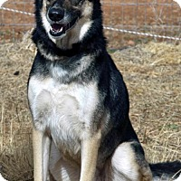 Adopt A Pet :: Nahla - Scottsdale, AZ