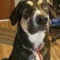 Adopt A Pet :: BLIZZARD - Hampton, VA