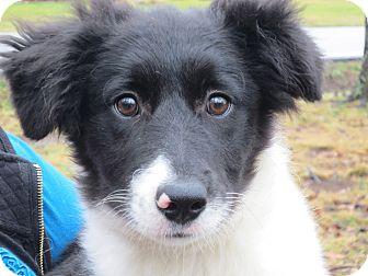 Pandora Adopted Puppy Lm Washington Dc Border