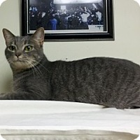 Adopt A Pet :: Houdini (a/k/a Dini) - Milwaukee, WI