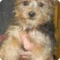 Adopt A Pet :: Morton - Antioch, IL