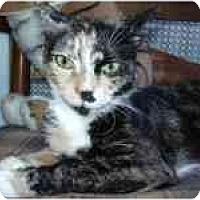 Adopt A Pet :: Arwen - Arlington, VA