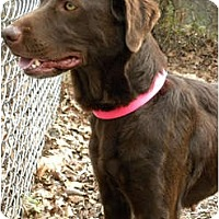 Adopt A Pet :: AWESOME DOG!  Reesey - Hagerstown, MD