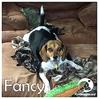 Adopt A Pet :: Fancy - Novi, MI