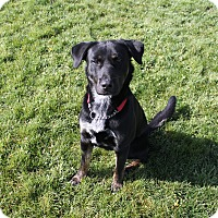 Adopt A Pet :: Sam - Goofball! - Bend, OR