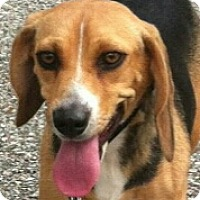 Adopt A Pet :: Chloe - Huntingburg, IN