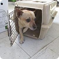 Adopt A Pet :: Toby - Visalia, CA