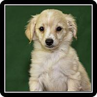 Adopt A Pet :: Monte - San Diego, CA