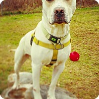 Adopt A Pet :: Duke - Acushnet, MA
