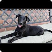 Adopt A Pet :: Rogue - Greeneville, TN