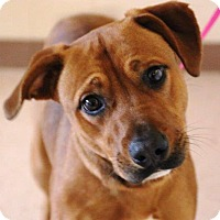 Adopt A Pet :: Windsor - Milton, GA