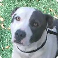 Adopt A Pet :: Lola - Chula Vista, CA