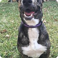 Adopt A Pet :: Georgia O'Keeffe - Dallas, TX