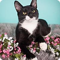 Adopt A Pet :: Lulu - Sterling Heights, MI